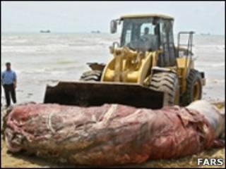 تصویری از لاشه نهنگ پیدا شده در سواحل خلیج فارس