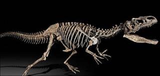 Allosauros, fotografía cortesía de Sotheby