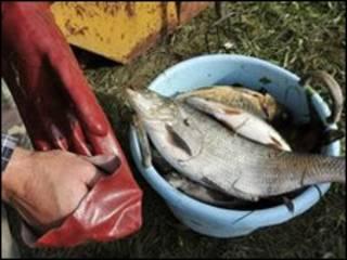 ماهی تلف شده در مارسال