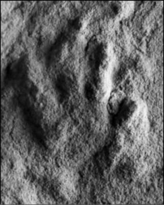 پروروتو داکتیلوس