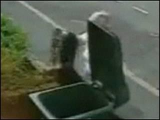 Кошка и мусорный бак