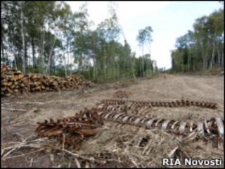 Строительство трассы через Химкинский лес
