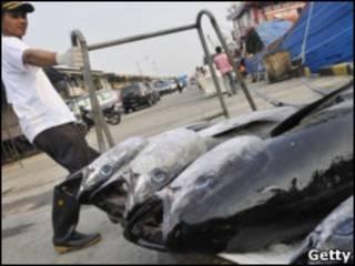 Atum de barbatana azul (Foto: Getty)