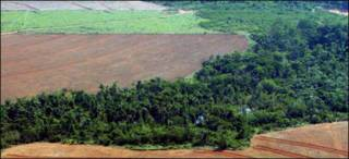Tierra para cultivo