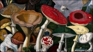 галлюциногенные грибы