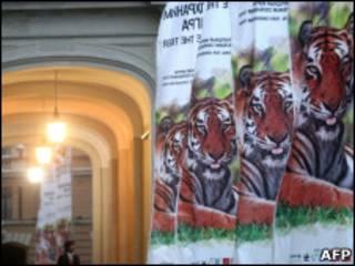 Форум по спасению тигров в Санкт-Петербурге