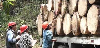 Manejo forestal comunitario en Ixtlán de Juárez, Oaxaca Foto: gentileza CCMSS