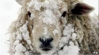 De fortes chutes de neige en Europe.