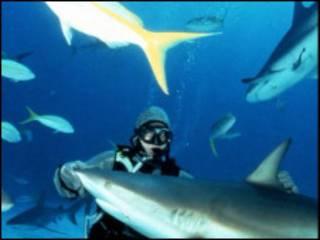 дайвер и акула