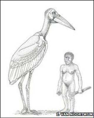 Marabu raksasa alias bangau raksasa