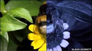 Floral Reflectance Database
