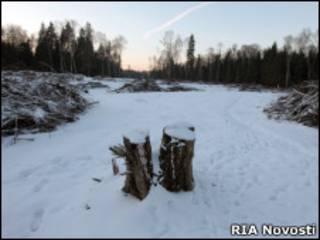 Место строительства трассы в Химкинском лесу