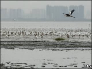 اردک دورپرواز
