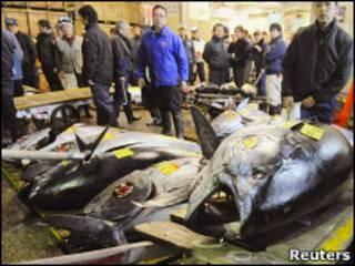 Тунцы разложены на полу на рынке Цукидзи в Токио