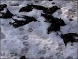 پرندگان مرده