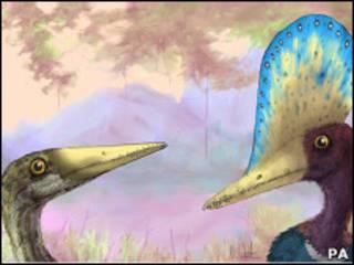 Рисунок самца и самки птерозавра
