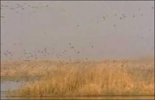 Pântanos no sul do Iraque