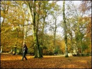 Английский лес