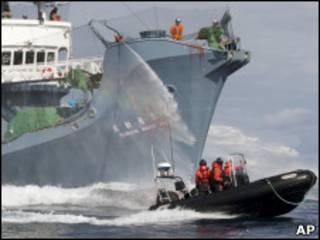 Японское судно и лодка экологов