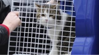 Larry, si kucing Downing Street, tiba dari tempat penampungan