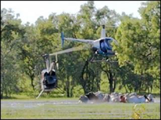 Helicóptero no pastoreio de gado na Austrália (BBC)