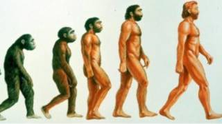 سیر تکاملی انسان