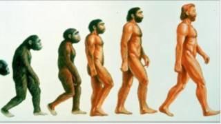 رسم افتراضي لمراحل التطور