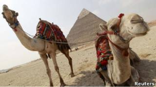Верблюды на фоне пирамиды в Египте