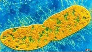Супербактерия