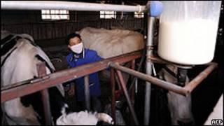 內蒙古呼和浩特附近某農村奶站(資料圖片)