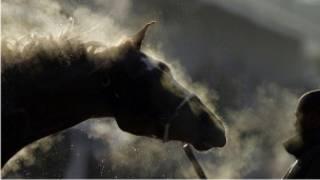 Giữ ngựa