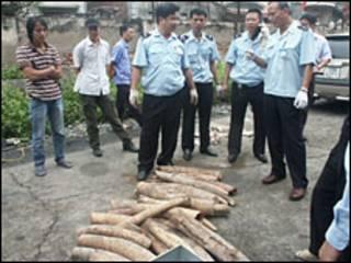 Ngà voi nhập lậu (hình: báo Tiền Phong)