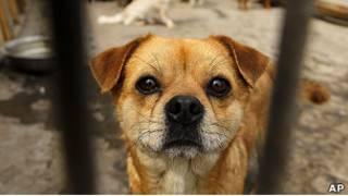 Одна из спасенных в Китае собак