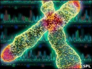 染色体端粒