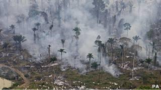 Desmatamento na Amazônia. Foto: PA