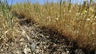 Посуха у Європі
