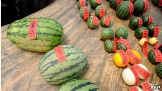 除了西瓜外,中國其他水果也存在使用氯吡反和其他化學物質的現象。圖為北京舉行的最大和最甜西瓜比賽中的參展西瓜(25/05/2011)