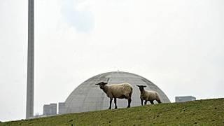 Unas ovejas pastan delante de una central nuclear