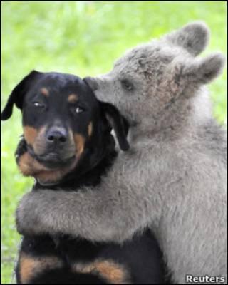 कुत्ता और भालू