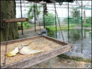 Pássaro morto no parque Wythenshawe