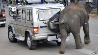 Слон в Індії