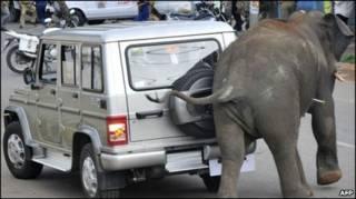 मैसूर में हाथी का उत्पाद