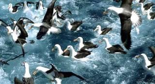 Albatros Foto Photolibrary