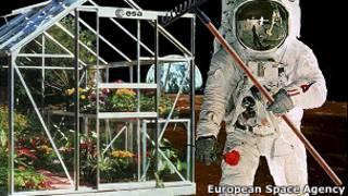 Astronauta jardinero