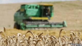 Campo de trigo na Rússia. Foto: Reuters