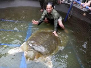 Rùa Hoàn Kiếm đã về nhà