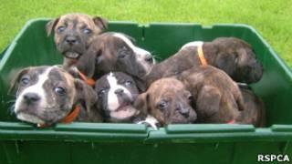 Filhotes de cachorro em caixa de reciclagem.
