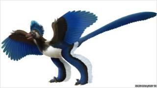 Рисунок ископаемой птицы Xiaotingia
