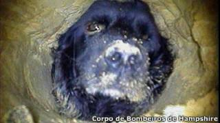 A cadela Ivy, presa em um buraco em Hampshire, na Inglaterra (Corpo de Bombeiros de Hampshire)