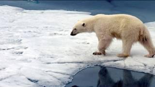 Urso polar em Svalbard (Arquivo)